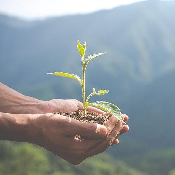 Respectueux de l'environnement et de la santé